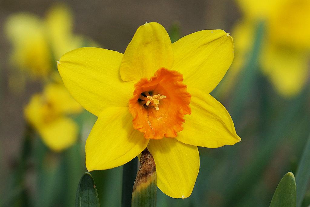 Blumen 8