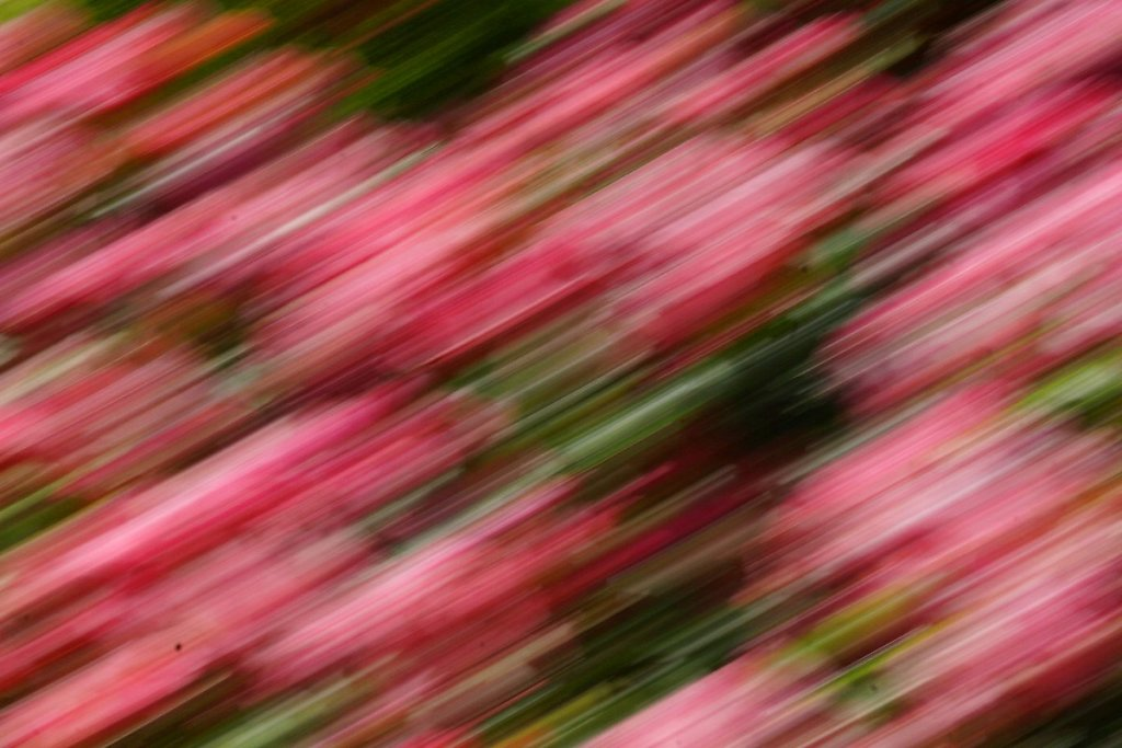 Blumen 18