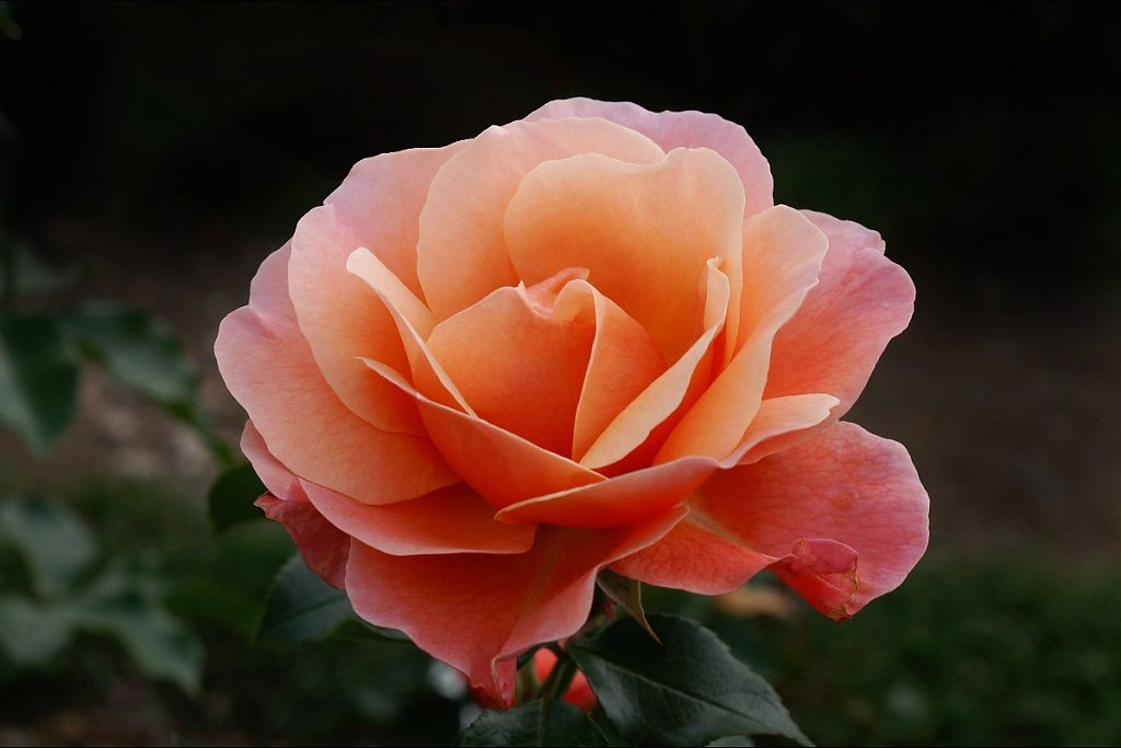 Blumen 10