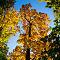 Herbst 6